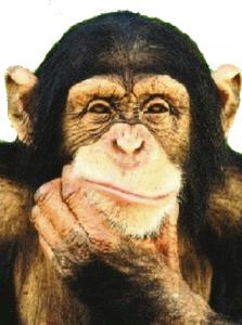 Le vieux singe contestataire capture-decran-2012-11-21-a-17.21.05-223x300