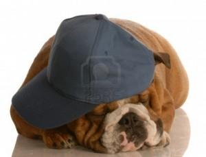Le branleur du fond du bus 4338278-english-bulldog-portait-une-casquette-bleue-sur-fond-blanc-de-couchage-300x229