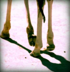 La Doisneau moderne pattes-de-girafe1-292x300